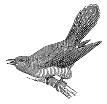 220px-Cuckoo_28PSF29.png
